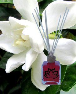 mikado-gardenia